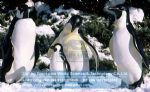 Animal Equipment christmas decoration bronner's fiberglass penguins DWC015