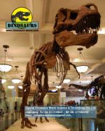 Science kit dinosaurs skeleton replica (T-rex Skeleton) DWS021