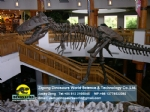 T-Rex Dinosaur Skeleton for Museum Exhibits DWS027