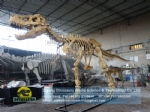 Museum equipment t-rex dinosaur skeleton for sale DWS037