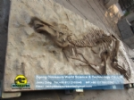 Complete hadrosaur fossil reproductions burial Situation DWF016