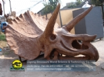 Schools use artificial Triceratops skull model DWF019