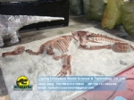 Pure handmade full hadrosaurs fossils replica burial situation DWF020